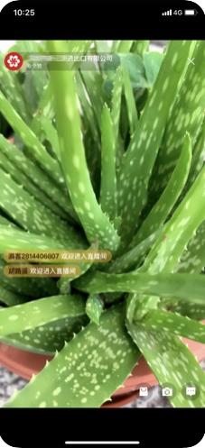 广交会展商直播间主播版app图2